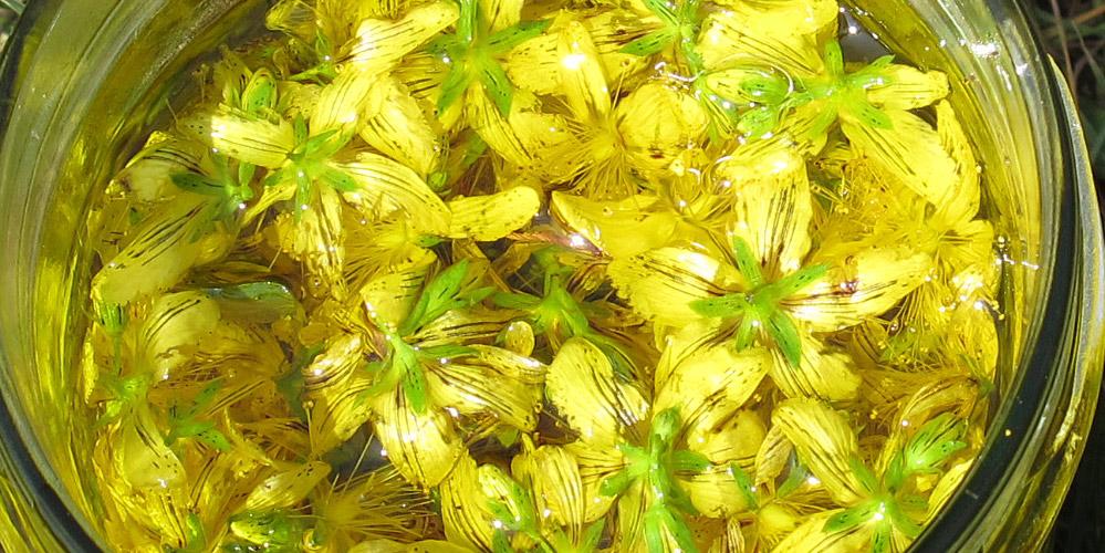 Johanniskraut Blüten in Öl