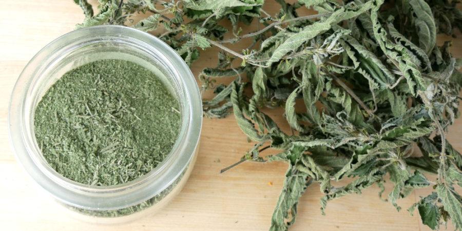 Grünes Pulver aus Brennnessel, Giersch und Ackerschatelhalm
