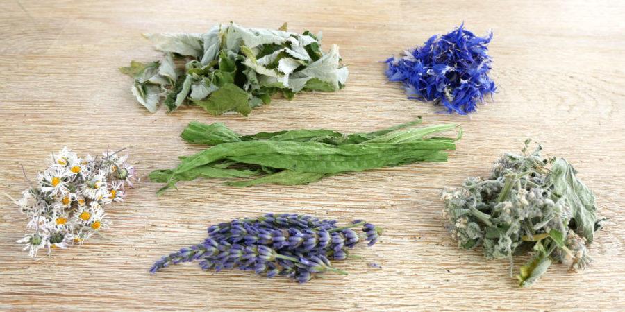Spitzwegereich, Himbeerblätter, Kornblume, Lavendel, Gänseblümchen, Melisse